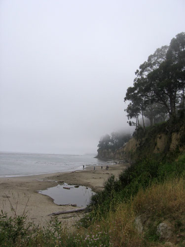 The beach with fog