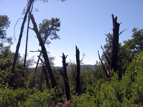 View, with signs of past fires