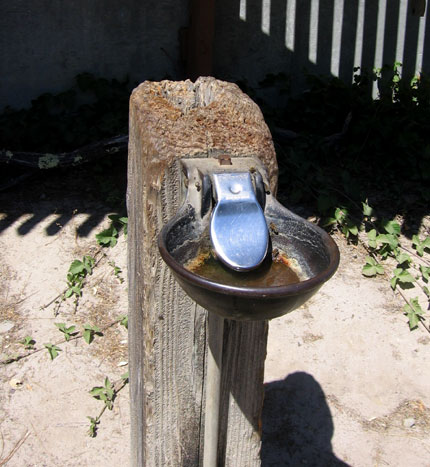 A drinking fountain for horses