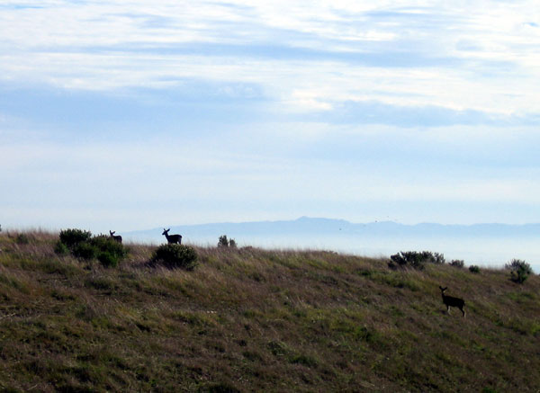 Deer on the ridge