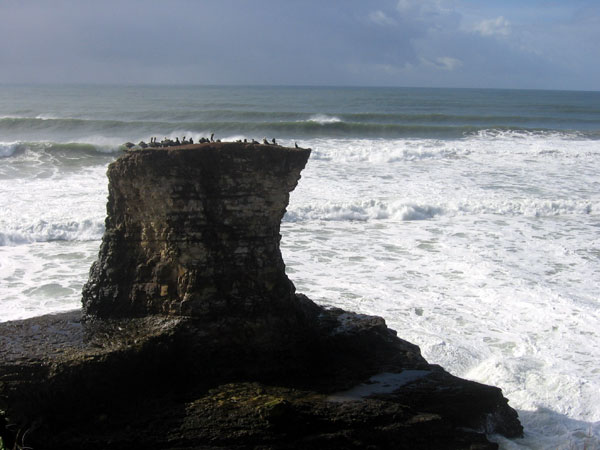 Birds on a sea stack