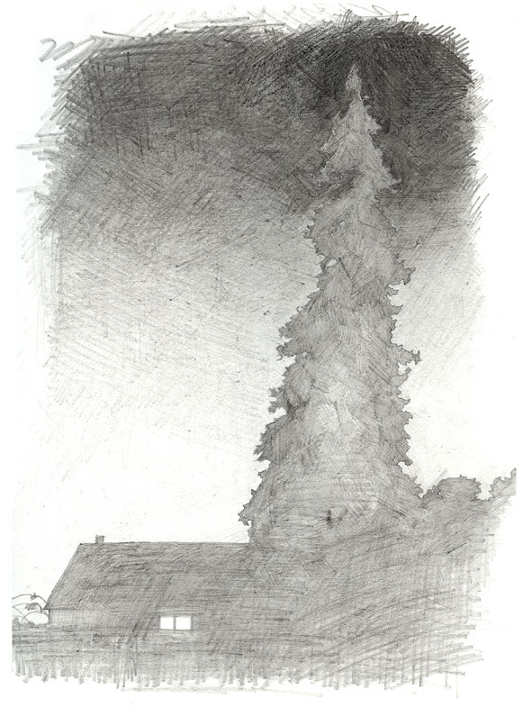 Homework 1: redwood tree and fog