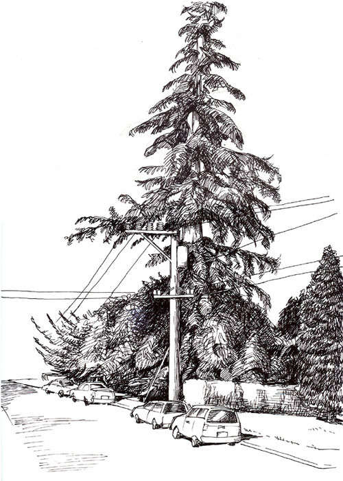 Homework 1: redwood tree and telephone pole