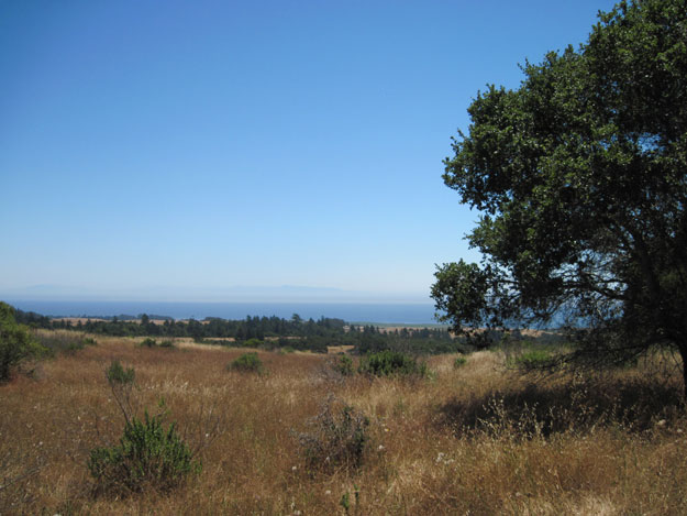 View of the ocean at Wilder Ranch State Park