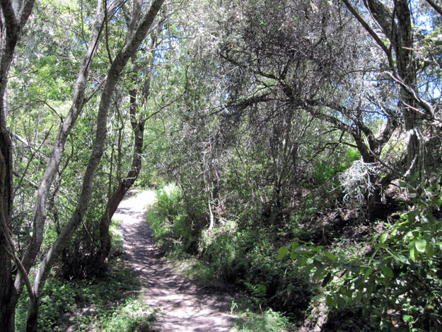 Twin Oaks Trail at Wilder Ranch State Park