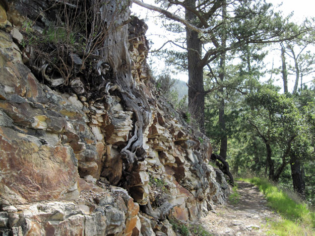 Rocks and trees along the trail
