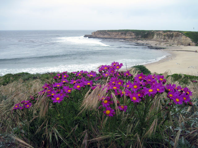 Flowers above Four Mile Beach