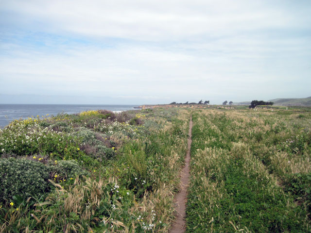 Grown up trail
