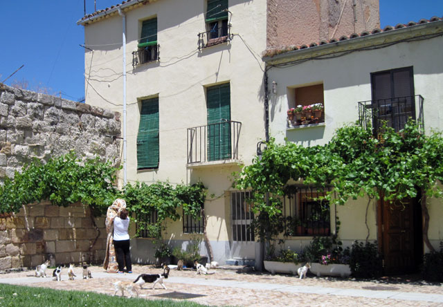 Cats and catlady, Zamora