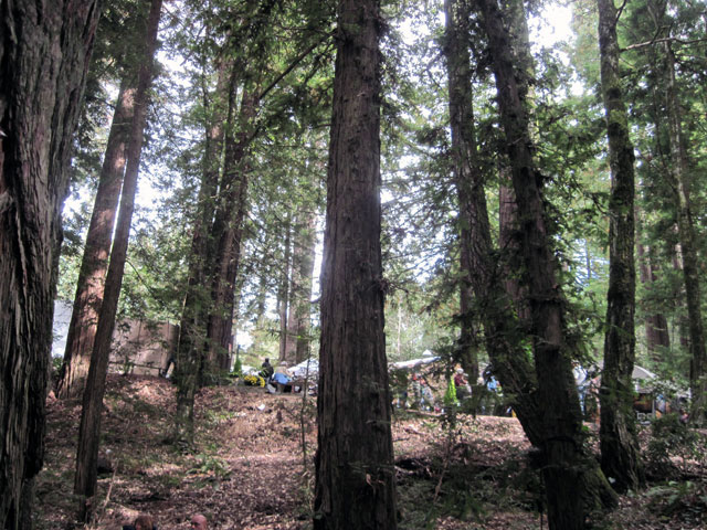 Trees at Kings Mountain