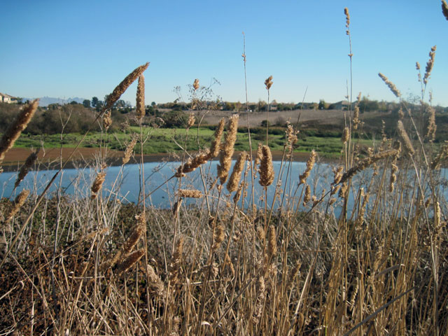 Reeds and open water