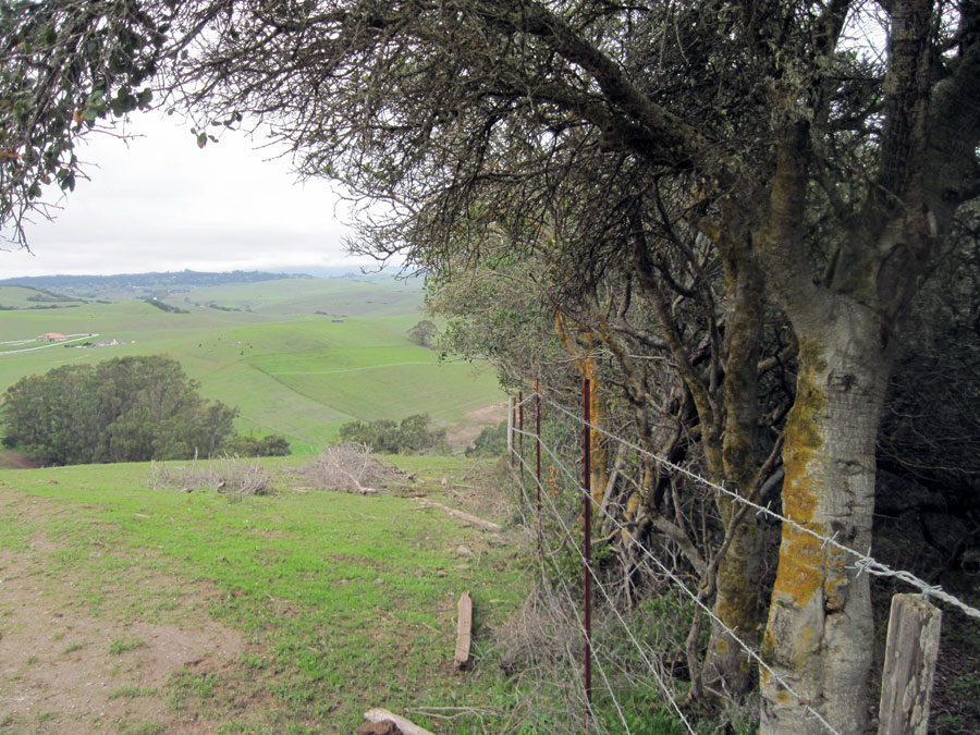 Oak trees and barbed wire fence