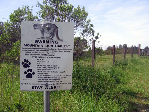 Watch out for mountain lions