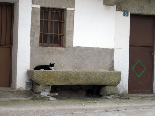 Cat on stone bench, Oliva de Plasencia