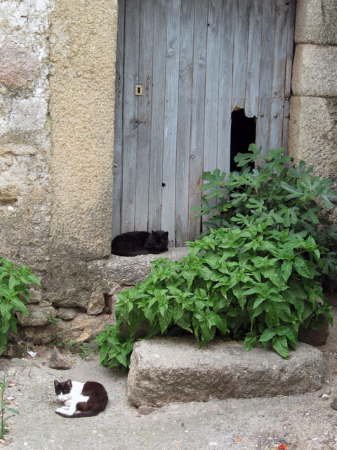 Cats in a doorway, Oliva de Plasencia