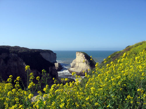 California coast in bloom
