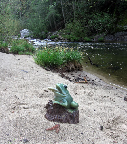The green frog by the river