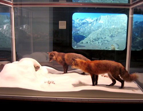 Pika --and marmot-- in display.
